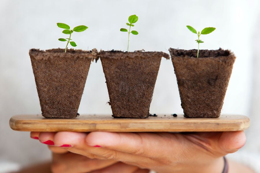 Secret Social Media Rules Your Business Should Follow to Grow Organically